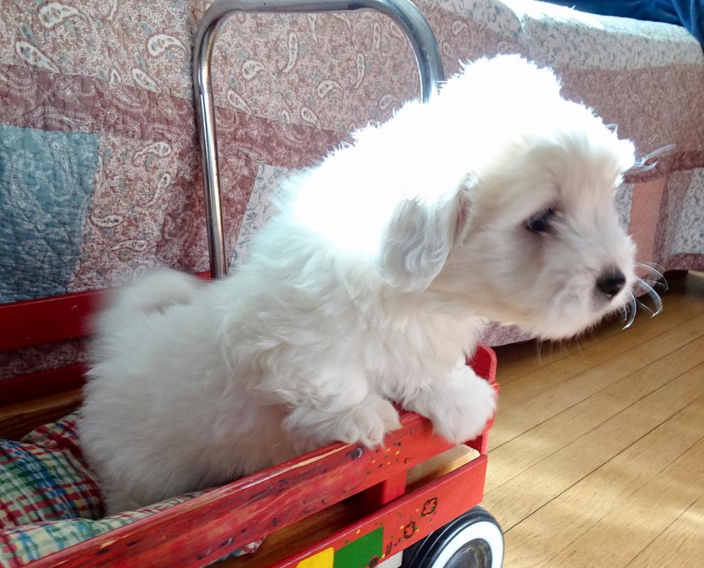 Free Puppies Nj